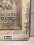cabinet-de-curiosites_3
