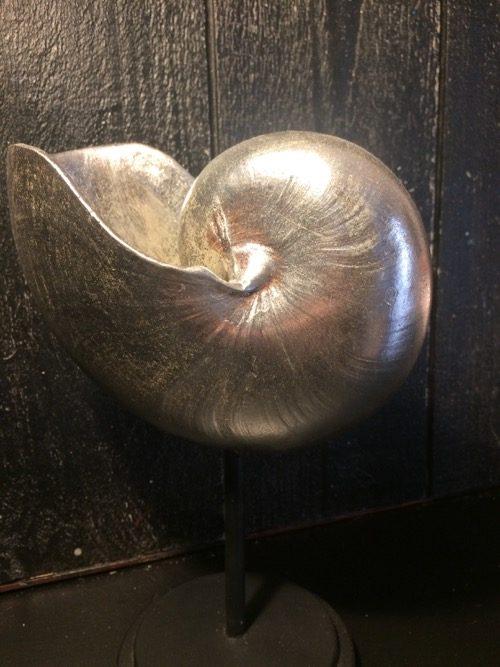 coquillage argenté 3
