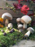 champignons en bois brut M2