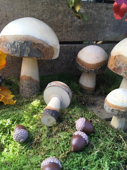 champignons en bois brut M2 2