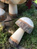 champignons en bois brut M2 3