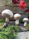 champignons en bois brut M2 4