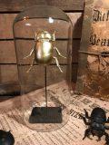 globe scarabée