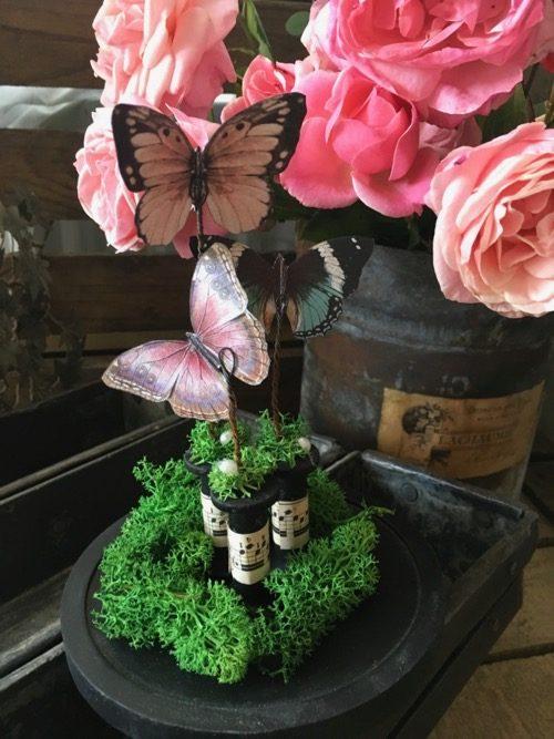 papillons sous globe 2