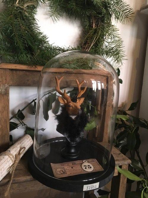 cerf sous globe cabinet de curiosités