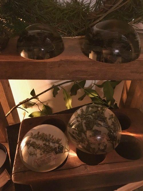 loupe d'herboriste